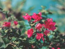 Красный цветок дерева над голубым небом Стоковое Изображение