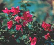 Красный цветок дерева над голубым небом Стоковые Фотографии RF