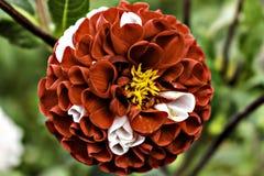 Красный цветок довольно стоковые изображения rf