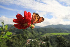 Красный цветок и бабочка Стоковые Фото