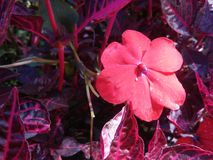 Красный цветок и красивые листья Стоковые Изображения