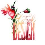 Красный цветок мака с падением лепестка с дизайном названия флористическим Стоковое Изображение