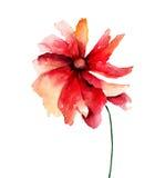 Красный цветок мака Стоковые Изображения RF