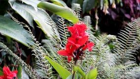 Красный цветок между зеленым папоротником и листья с нежным ветерком сток-видео