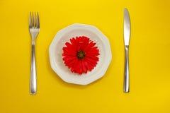 Красный цветок на белой плите стоковая фотография rf