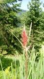 Красный цветок на горах стоковые изображения rf