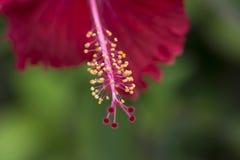 Красный цветок на запачканной зеленой предпосылке Стоковое Изображение RF