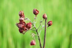Красный цветок на зеленой предпосылке стоковое фото