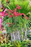 красный цветок орхидеи в саде Стоковая Фотография RF