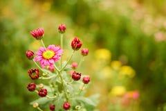Красный цветок с зеленой предпосылкой Стоковое фото RF