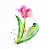 Красный цветок тюльпана, иллюстрация акварели иллюстрация вектора