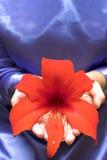 Красный цветок Стоковое Изображение RF