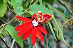 Красный цветок стоковые изображения rf