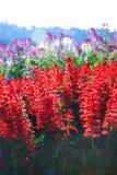 Красный цветок стоковая фотография rf