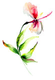 Красный цветок hibiscus Стоковые Фотографии RF