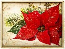 Красный цветок poinsettia с ветвью рождественской елки стоковое изображение