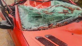 Красный цвет автомобиля разрушенный после шторма большим деревом сток-видео