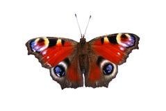 красный цвет бабочки Стоковые Фотографии RF