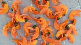 Красный цвет быстрого цветеня цветка сухой стоковые фотографии rf