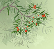 красный цвет ветви ягод иллюстрация вектора