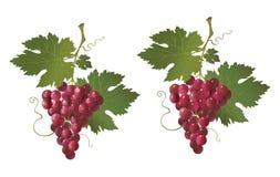 красный цвет виноградины Стоковое Изображение RF