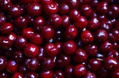 Красный цвет вишни, конец-вверх Стоковое Изображение