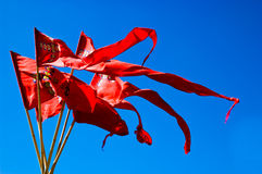 красный цвет вымпела Стоковые Фото