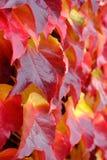 Красный цвет выходит деталь Стоковое Изображение