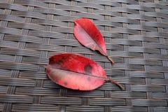 Красный цвет выходит сиять цвета дерева после зимы - Парижа, Франции стоковое фото rf