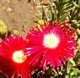 Красный цвет в природе стоковое фото rf