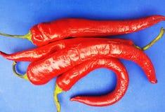 красный цвет горячего перца Стоковые Изображения RF