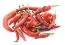 красный цвет горячего перца chili Стоковые Фото