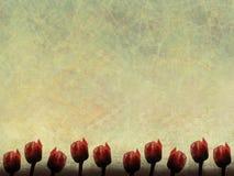 красный цвет граници бумажный поднял Стоковое Фото