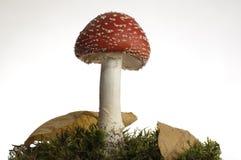 красный цвет гриба Стоковая Фотография