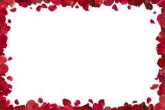 красный цвет лепестков рамки поднял Стоковые Фото