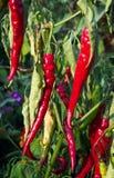 красный цвет жары Стоковая Фотография RF