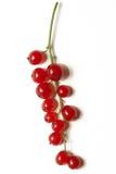 красный цвет жизни смородины ягод все еще стоковое фото