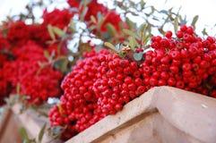 красный цвет завода стоковая фотография