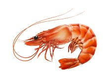 Красный цвет закипел креветку креветки или тигра изолированную на белой предпосылке Стоковая Фотография RF