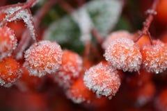 красный цвет замерли ягодами, котор стоковое изображение