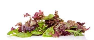 красный цвет зеленого салата смешанный Стоковые Изображения