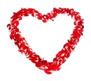 красный цвет изолированный сердцем Стоковое Фото