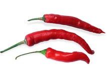 красный цвет изолированный chili Стоковое Изображение