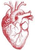 красный цвет иллюстрации сердца Стоковое Фото