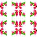 красный цвет имбиря цветка Стоковое Изображение