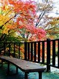 Красный цвет листает красочные леса Стоковое Изображение RF