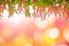 Красный цвет листьев весной или красивое в запачканной природе над заходом солнца Стоковые Изображения RF