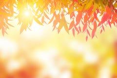 Красный цвет листьев весной или красивое в запачканной природе над заходом солнца Стоковое фото RF
