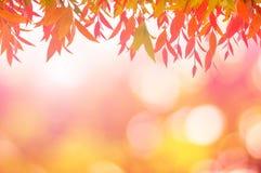 Красный цвет листьев весной или красивое в запачканной природе над заходом солнца Стоковые Фото