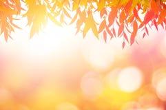 Красный цвет листьев весной или красивое в запачканной природе над заходом солнца Стоковая Фотография
